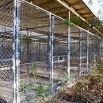 Empty detention cells in Camp X-Ray, which was abandoned in 2003. Nature has since taken over. The camp was originally used to hold troublesome refugees in the early 1990s and was repurposed in 2001 to hold detainees in support of the War on Terror.