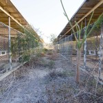 Though not large, Camp X-ray could hold up to 299 detainees at a time. Since being abandoned, nature is the only occupant. The camp was originally used to hold troublesome refugees in the early 1990s and was repurposed in 2001 to hold detainees in support of the War on Terror.