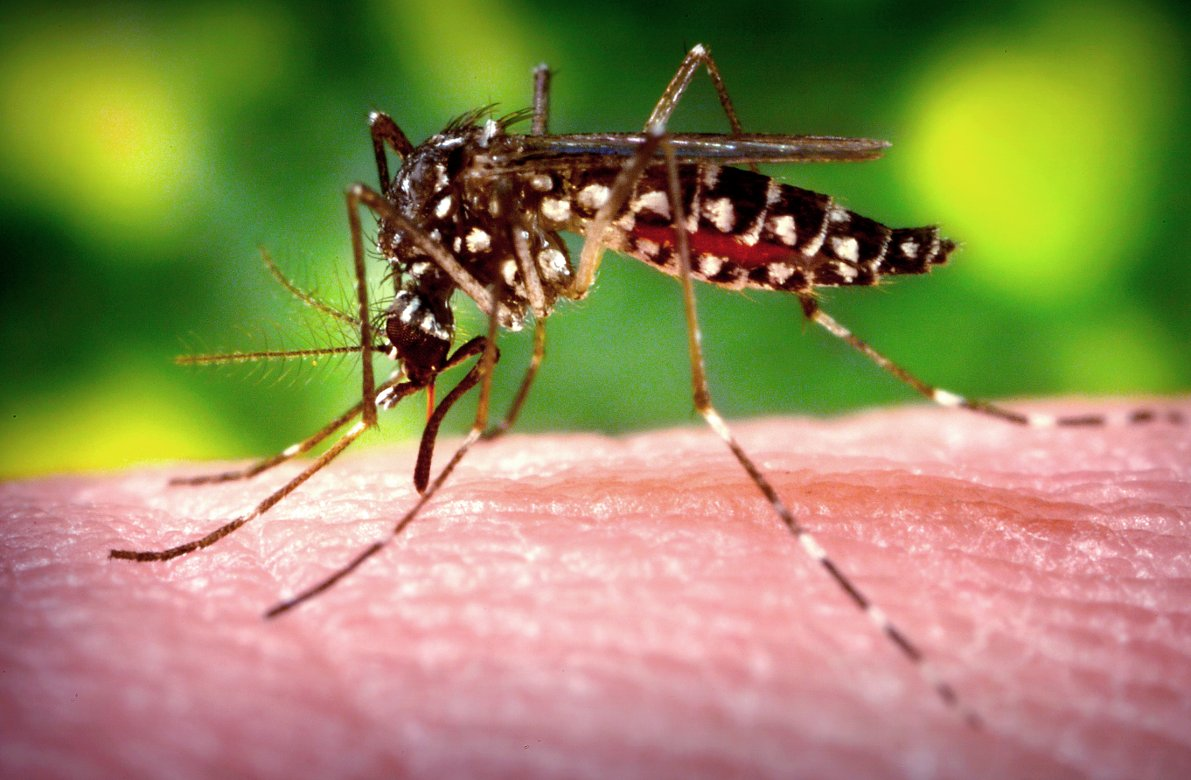 USAID challenges innovators to combat zika