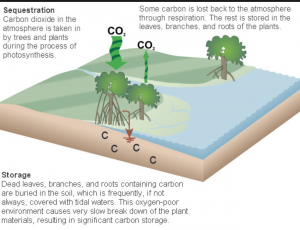 Carbon sequestration: plants consume carbon dioxide and deposit carbon in the soil. Photo courtesy of NOAA.