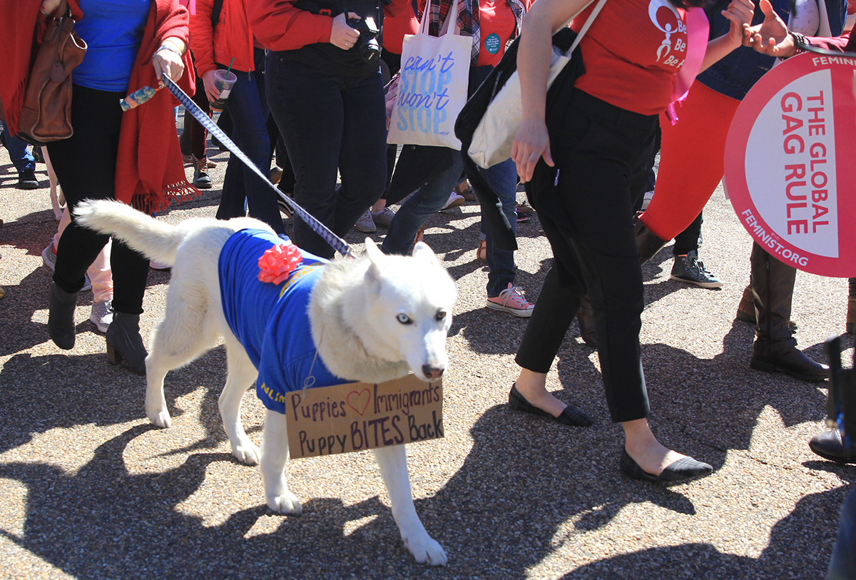 Protest Dog