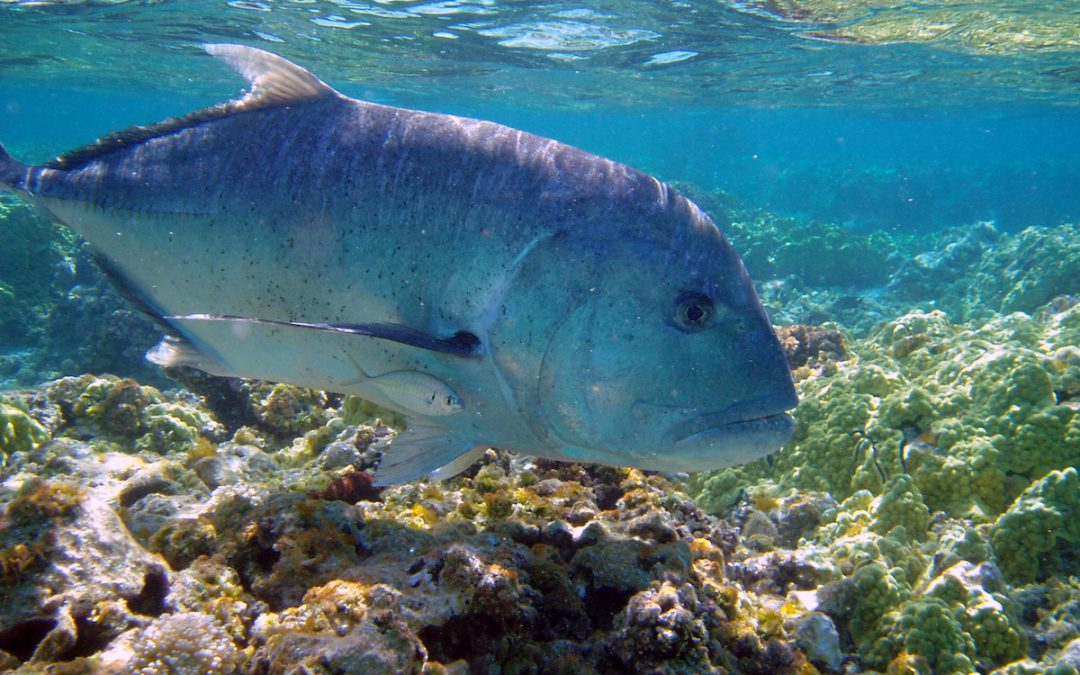 NOAA Extends Deadline for Public Comments on Protected Marine Sites