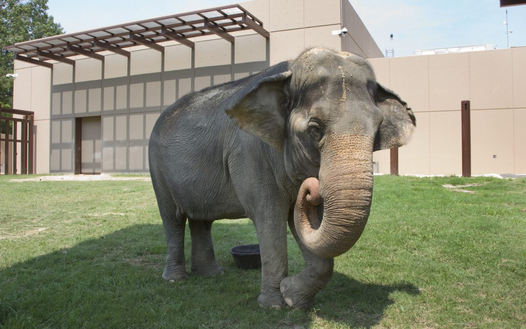 How Zoos Across the Country Plan to Celebrate World Elephant Day
