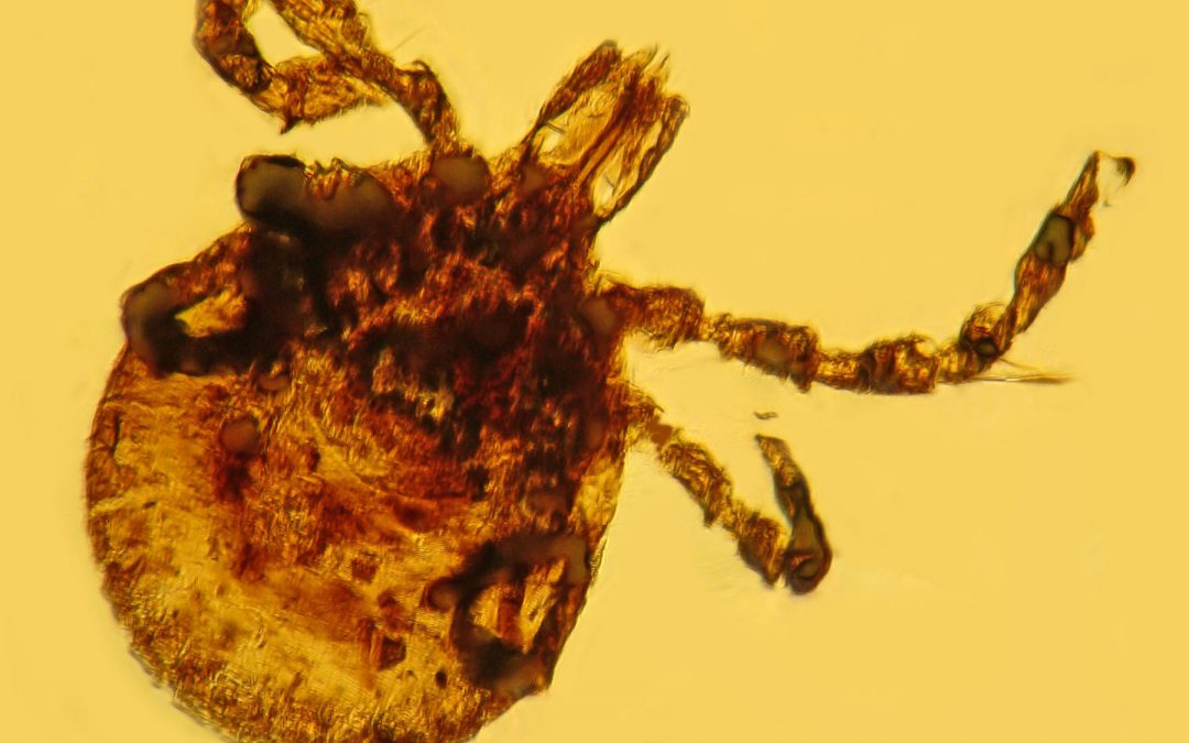 House measure on weaponized ticks revives discredited conspiracy theory