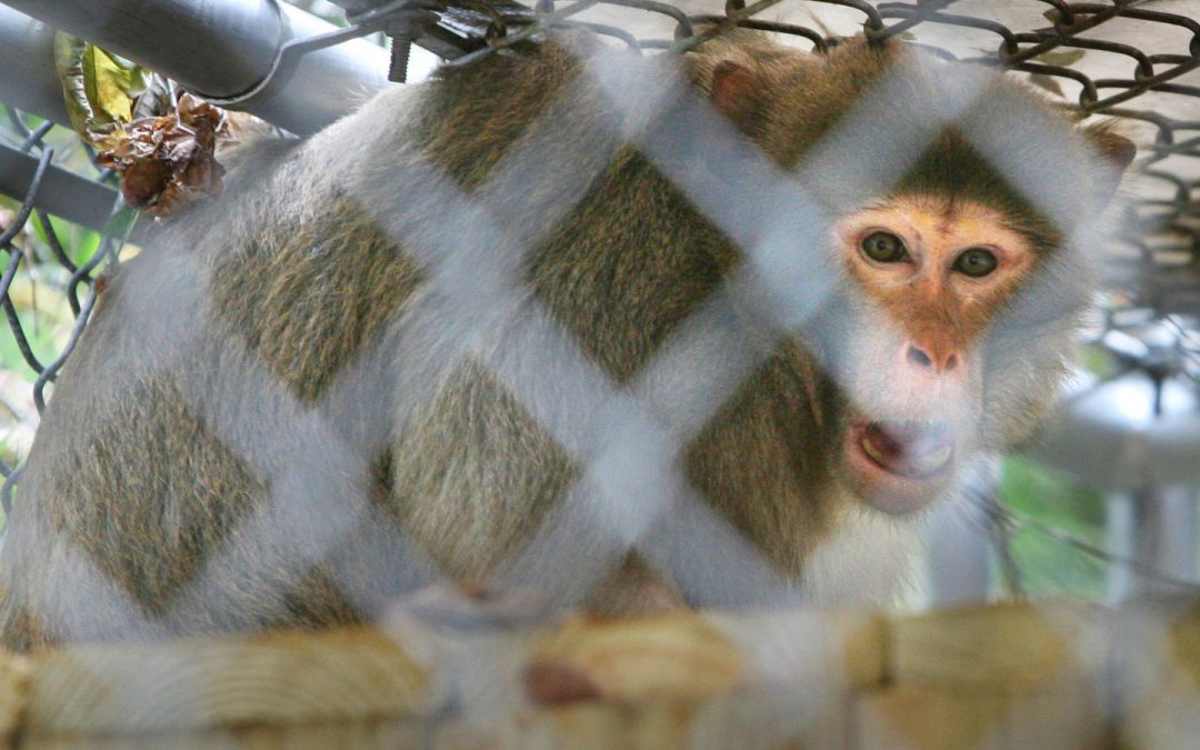 Congress moves to make monkey trading illegal across state borders