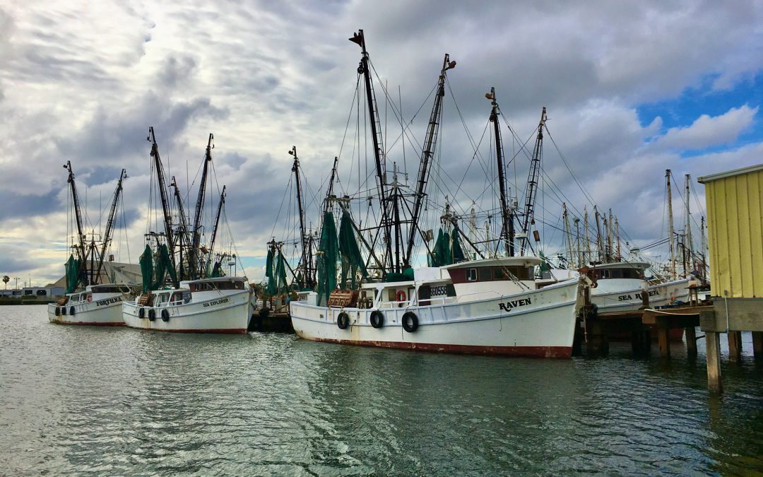 Florida fisheries wait for federal aid as prices take a deep dive