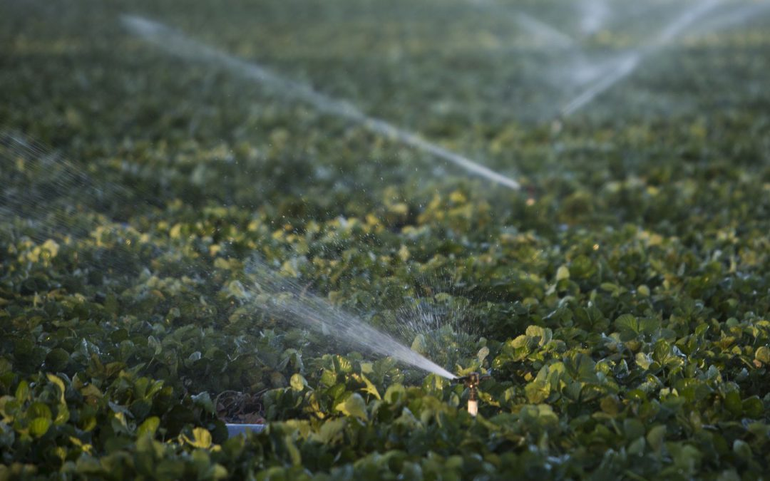 Congress seeks relief for Florida's struggling agriculture industry