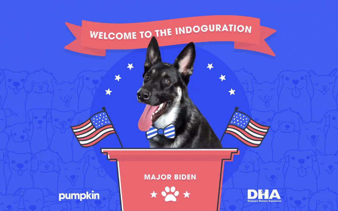 Biden's dog Major honored at 'Indoguration' celebration; Josh Groban performs